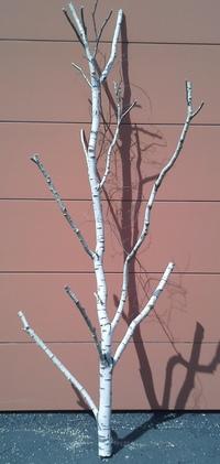 arbre bouleau la ref 6