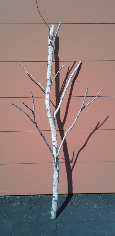 arbre bouleau la ref 10