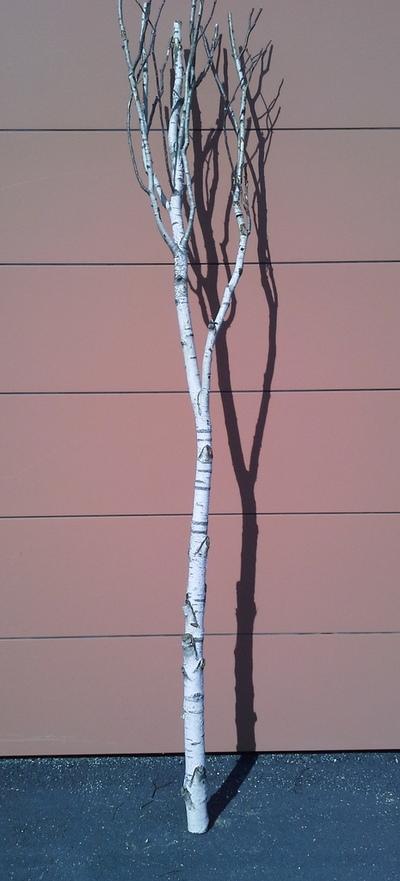arbre bouleau la ref 13
