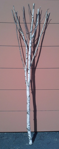 arbre bouleau la ref 16