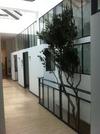 arbres stabilisés