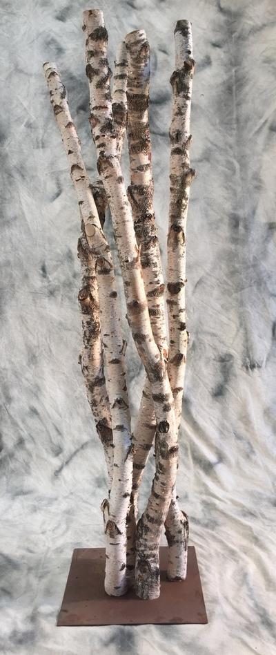 Colonne de gros troncs de bouleaux