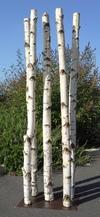 Colonne de 5 troncs de bouleaux de 2m en 10cm de diamètre montés sur socle