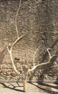 Dead tree ref 2
