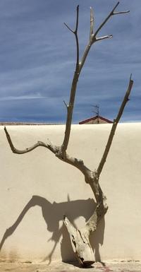 Dead tree ref 4