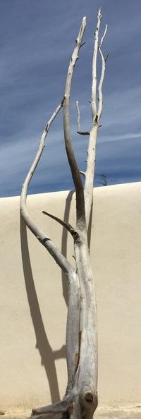 arbre en bois flotté