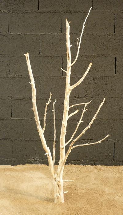 arbre mort ref 220
