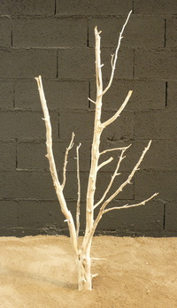 Dead tree ref 220