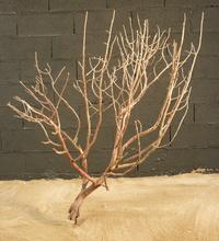 arbre mort ref  225
