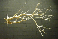 Dead tree ref 238