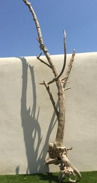 arbre en bois flotté ref 140