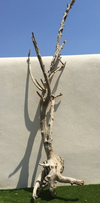 arbre bois flotté ref 141