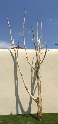 arbre mort ref 156
