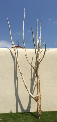 Dead tree ref 156