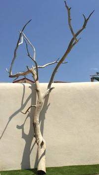 Dead tree ref 143