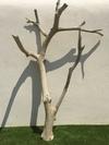 arbre mort ref 148