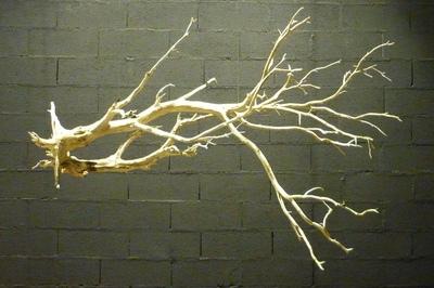arbre mort ref238