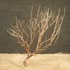 arbre mort ref225