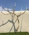 arbre mort ref152