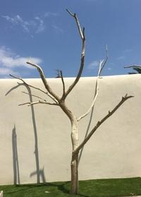 Dead tree ref 150
