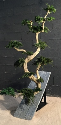 Bonzai with juniperus on slate