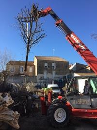 arbre mort ref 5051