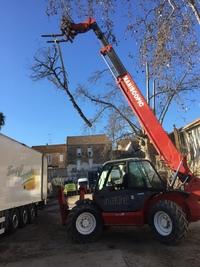 arbre mort ref 5064
