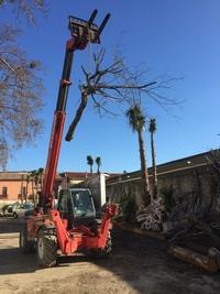 arbre mort ref 5090