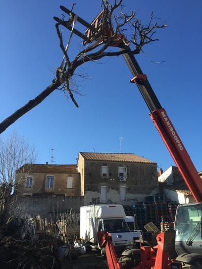 arbre mort ref 5110