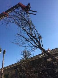 Dead tree ref 5139