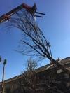 arbre mort ref 5139