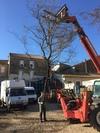 arbre mort ref 5151