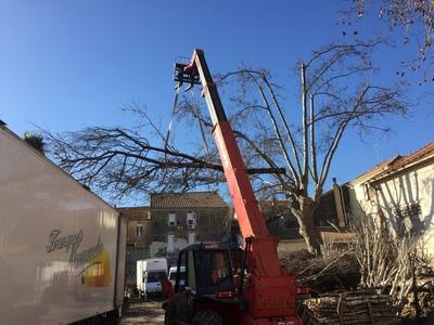 arbre mort ref 5226