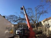 Dead tree ref 5226