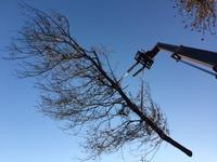 arbre mort ref 5236
