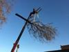 arbre mort ref 5240