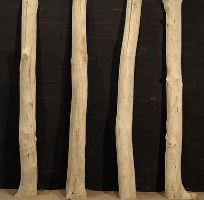 Tronc de bois flotté coupé en deux
