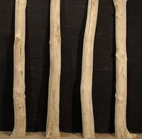 Driftwood trunks cut in half